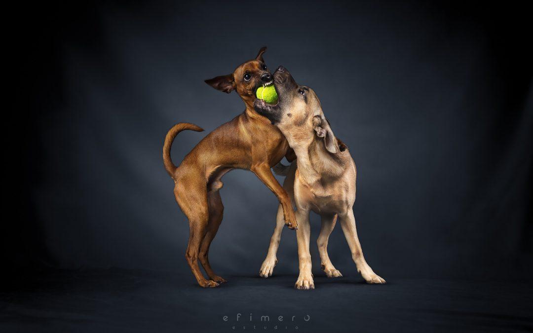 Bruno y Max